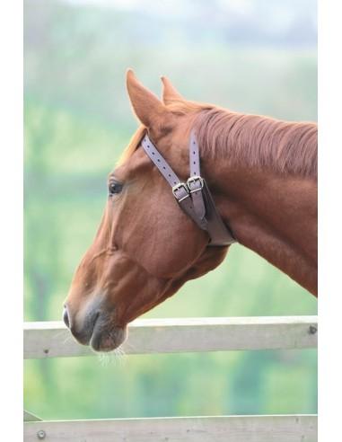 Adelfia Anti-Crib Collar