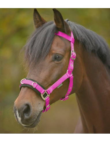 ECO Lunging Halter