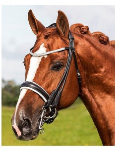 DOUBLE BRIDLE COWN DAVINCI WITH GEL (WITH REINS)