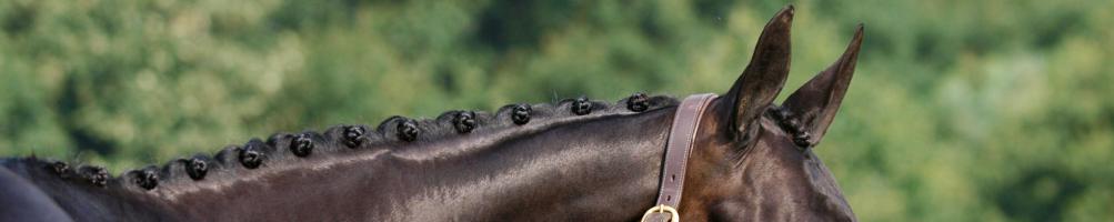 Plaiting Accessories for Horses