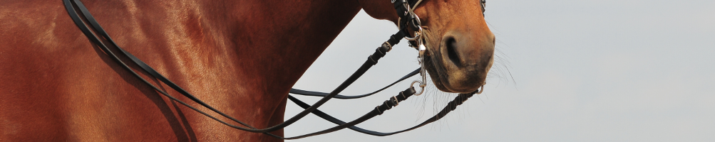 Reins for orses
