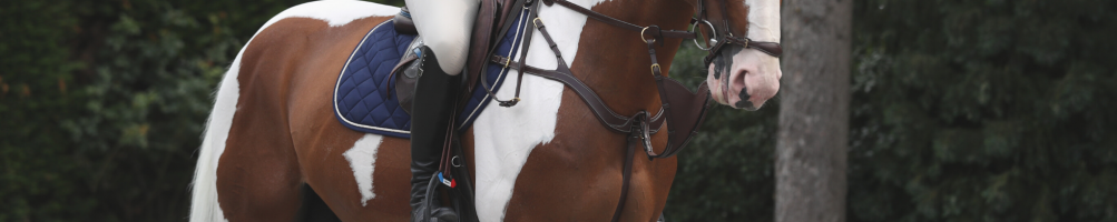 Breastplates and Martingales for Horses