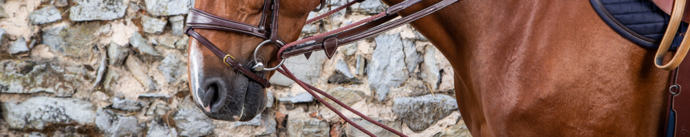 Gymnastic Martingales for Horses