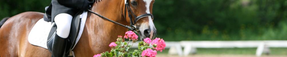 Sillas de Montar para Pony