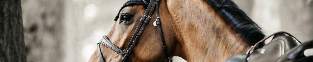 Briddles for Horses