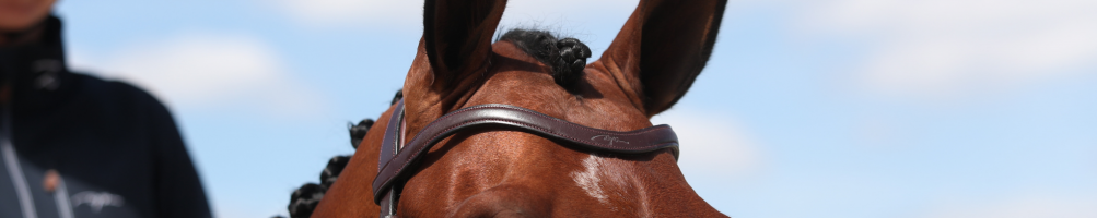 Browbands for Horse Riding