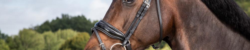 Nosebands for Horses