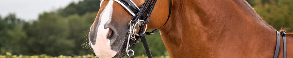 Double Bridles for Horses