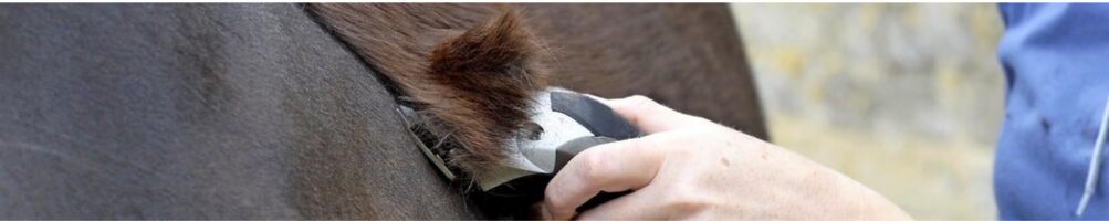 Clipping Machines for Horses