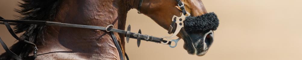 Hackamores for Horses