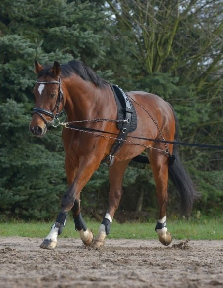 Lunge and Work a Horse