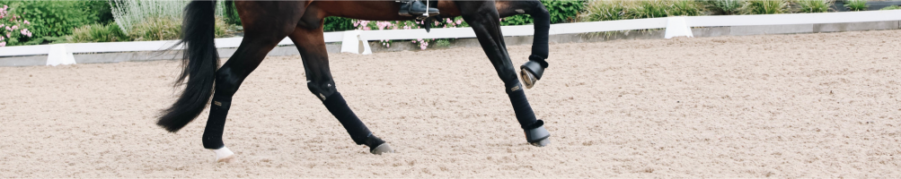 Boots and Bandages for Horses