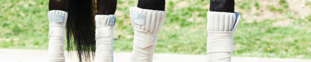 Bandage Pads for Horses
